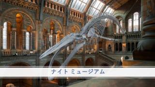 『ナイト ミュージアム』イメージ画像