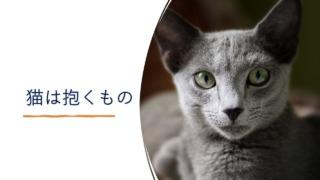 『猫は抱くもの』イメージ画像