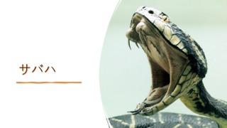 『サバハ』イメージ画像